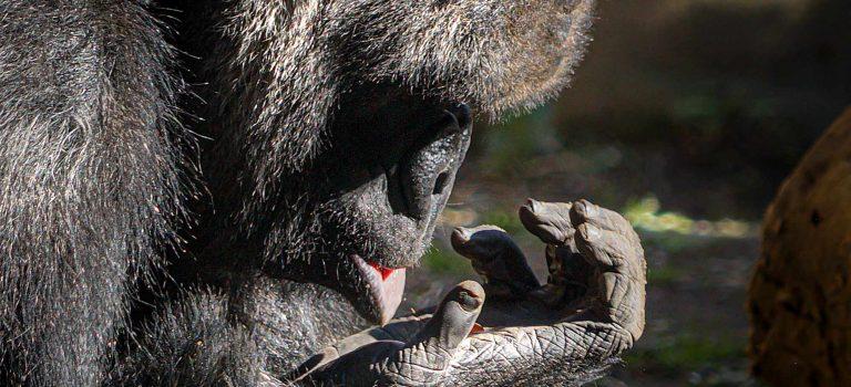 Ein Tag im Zoo Barcelona