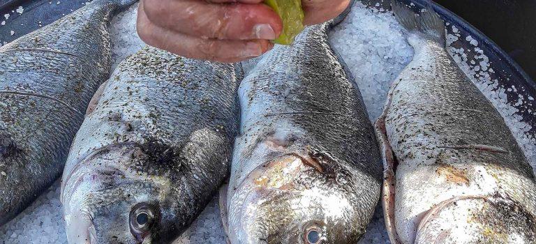 Meeresfrüchte: frisch auf den Tisch