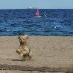 playa d'Aro, Strand, Meer, Junges spielt mit Hund